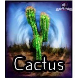 Eliquide Cactus - Les Jus de Nicole - 50ml